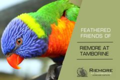 Feathered Friends of Riemore at Tamborine