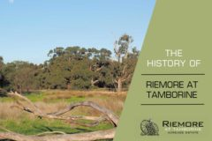 The History of Riemore at Tamborine